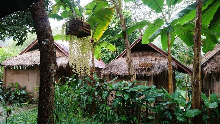 Banana House ChiangRai