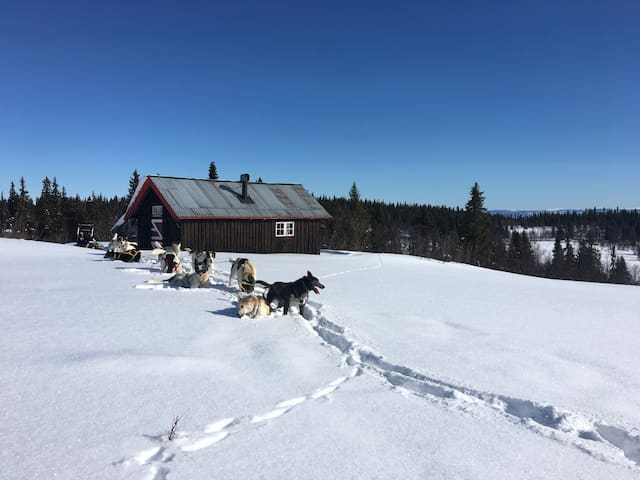 Idyllic cabin in the mountains 940m - Svatsum - Chatka