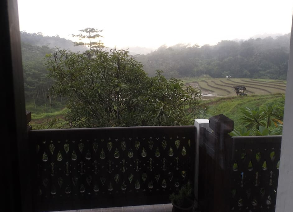 View of paddy terraces from balcony