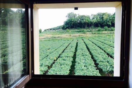 Relax in the vineyards near Verona2 - Illasi - 家庭式旅館