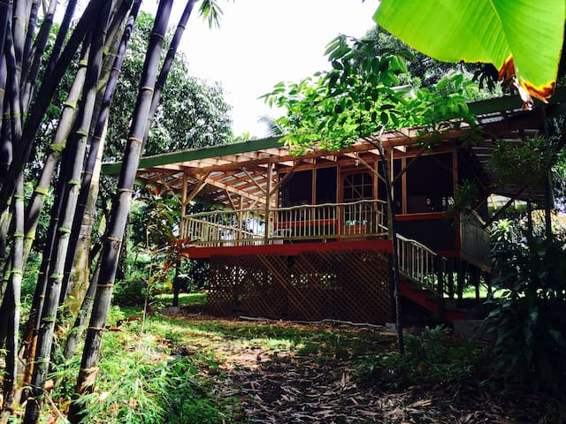 Secluded Bamboo Cabin on Sacred Healing Land
