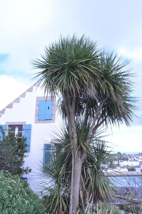 2. Ansicht vom Garten, die Palme ist gewachsen