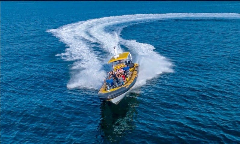 The discount card gives you discounts on high speed rib boat rides – fun way to whale watch.