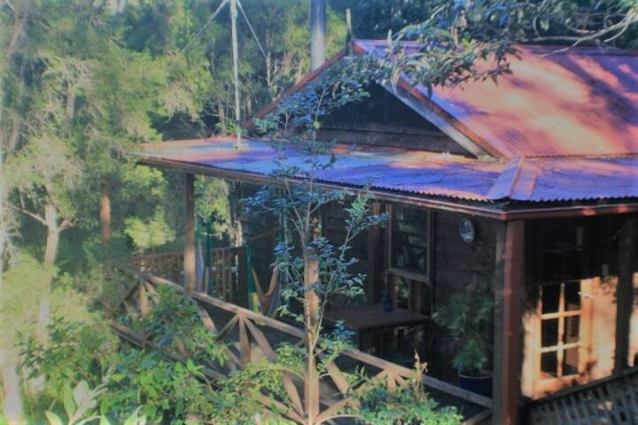 Bluegums Cabins - The Lilypond Cabin