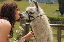 50+ Miniature rare-breed animals - Lovin the Llama