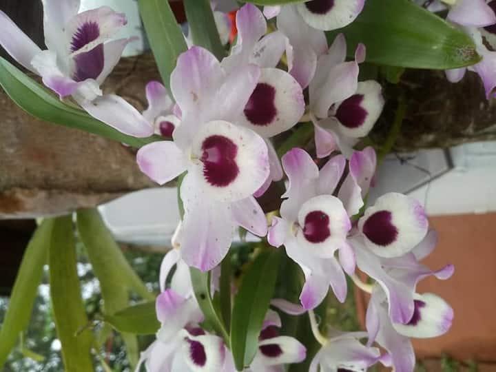 Cabañas Las Orquideas