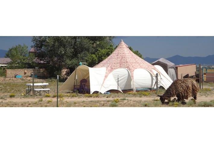 Lotus Belle glamping yurt/tent with Llamas