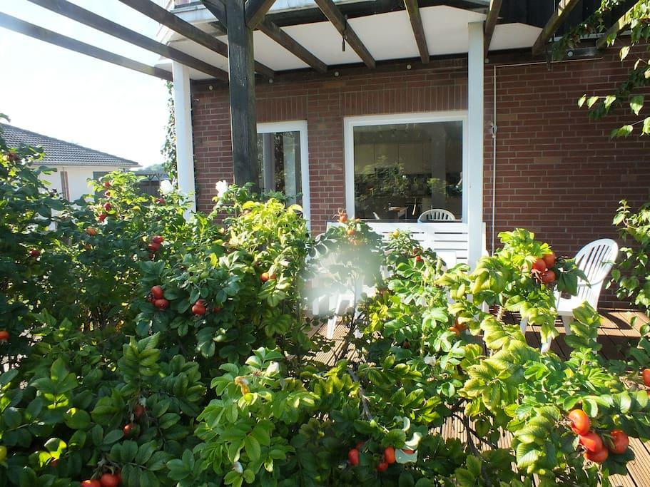 Die Terrasse versteckt hinter Heckenrosen