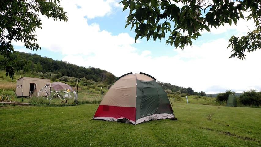 Aquaponic Farmstay - Campsite