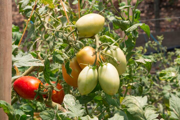 We have a little natural Orchard and you can buy organic vegetables