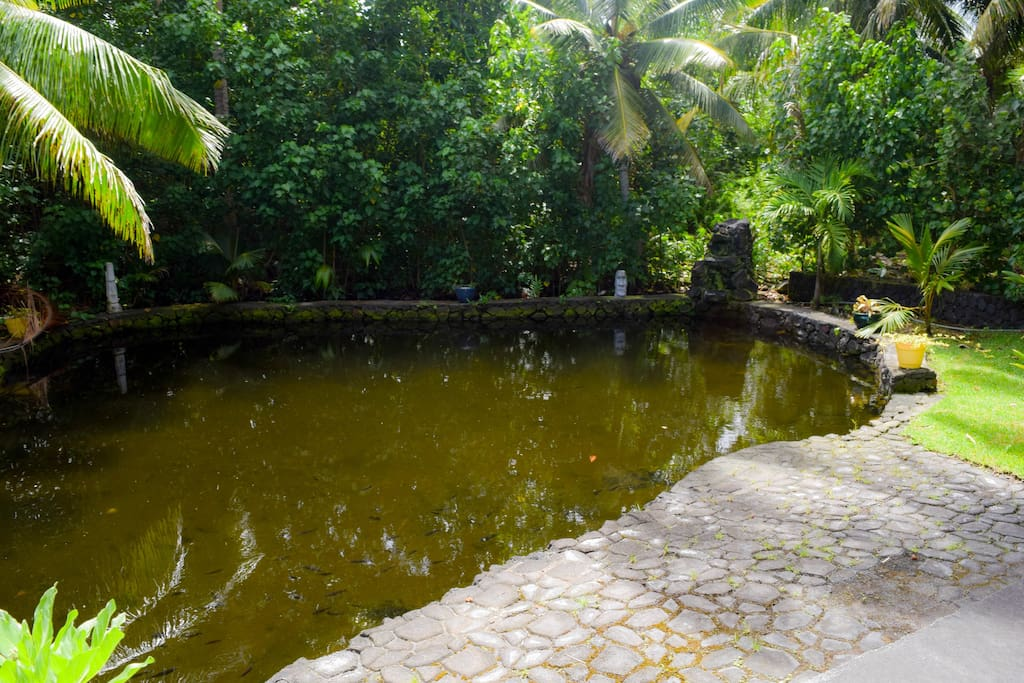 Extra large private geothermally heated tidal pond is perfect for swimming, soaking, floating or just gazing