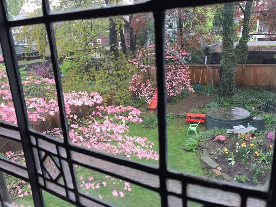 Backyard through the landing window