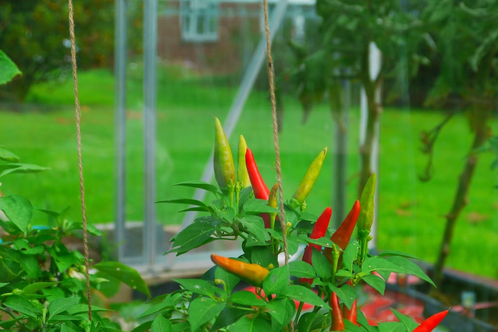 A welcome as warm as chilli's :)