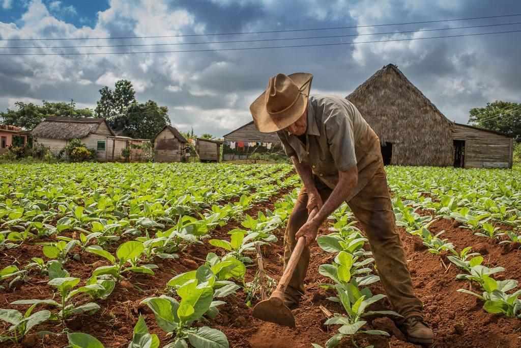 Visitas a cultivos de tabaco