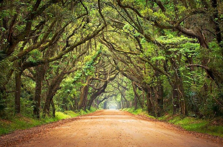 Edisto Island - Botany Bay Road 1 hr 20 min Away