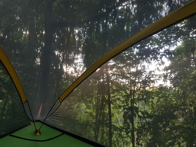 Your view: Toucan Habitat comes with a sloping valley view and primary rainforest all around.