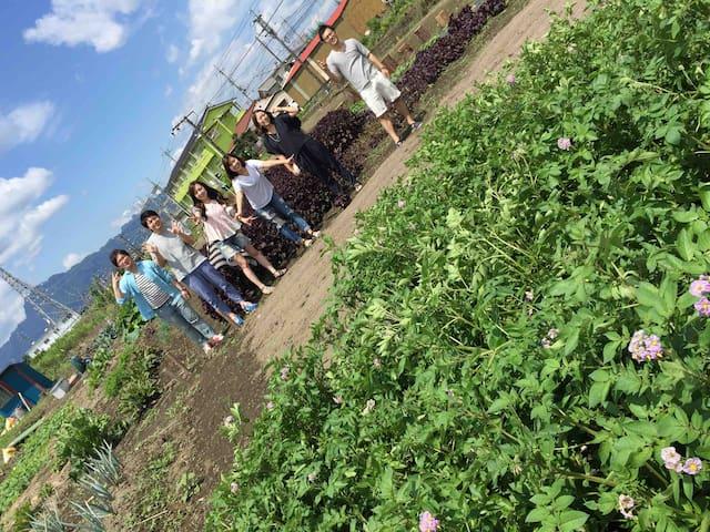 民泊から徒歩5分。ジャガイモ畑です。 6月頃〜7月芋掘りができます。