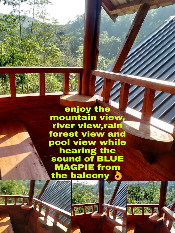Peaceful wooden cottage with Rainforest excursion