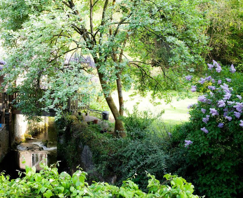 Stream view from cottage garden