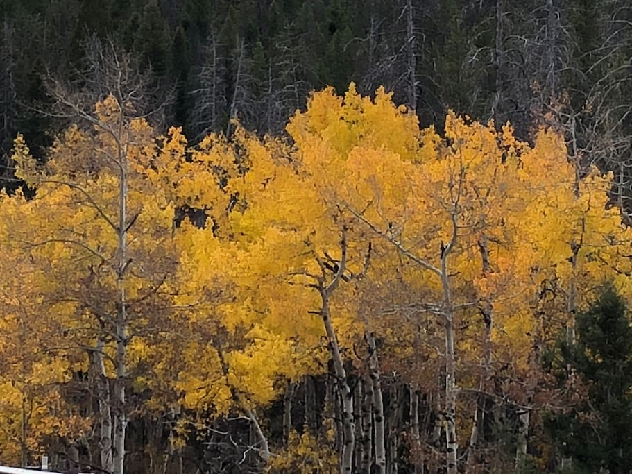 Fall in Montana