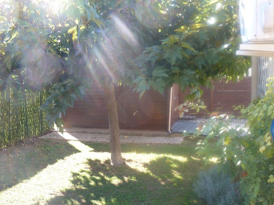 Salon de jardin possible sous le mûrier platane