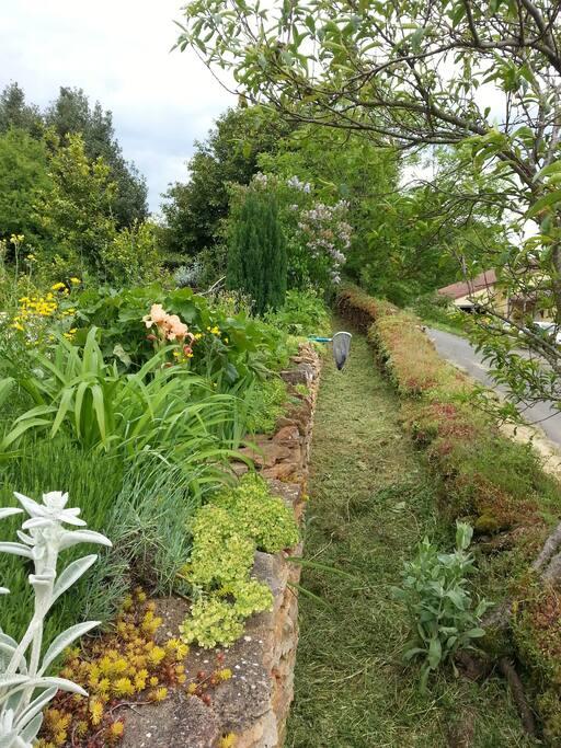 Vue jardin, entre plantes grasses, lilas, iris, et autres...