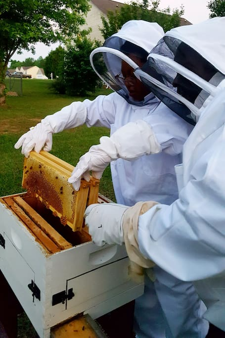 Guest watching a hive inspection