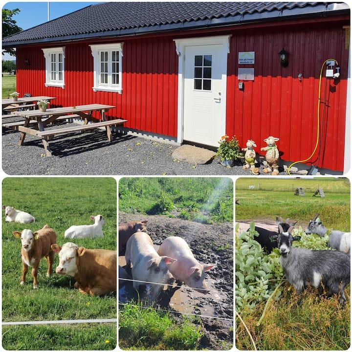 Unikt gårdsopphold på Findal Gård