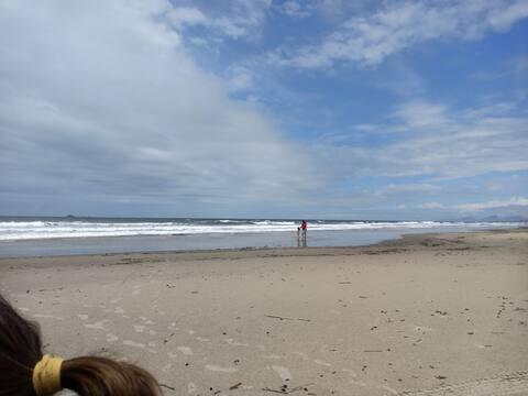 Beach Houses Season