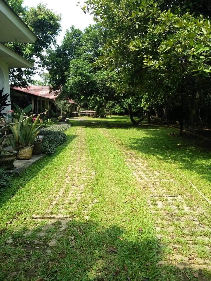 Garden in City Living