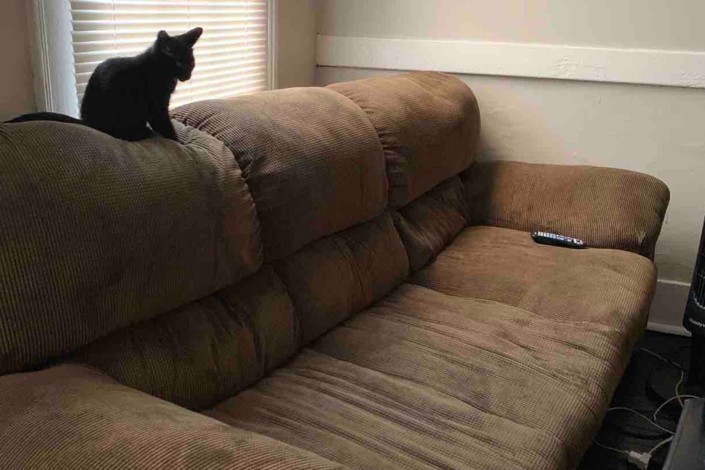 The Couch & Kitty Package