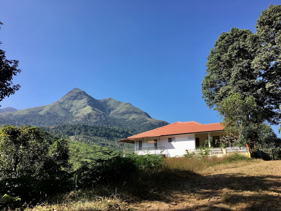 Wake up to the extra ordinary view of the peak of Chembra !  view as you enter the Jackfruit Tree's premises!