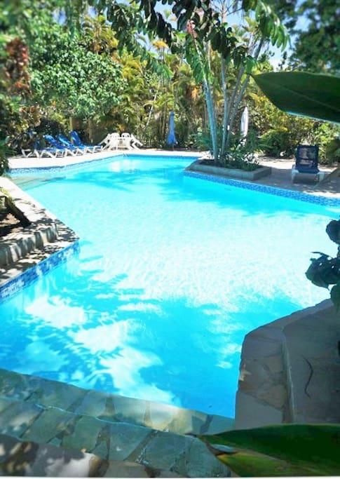 Large pool in the Caribbean garden