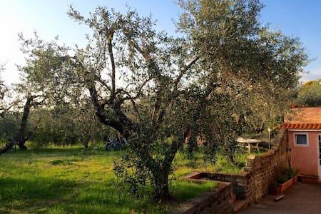 Relax nella campagna romana - Lanuvio - Pis