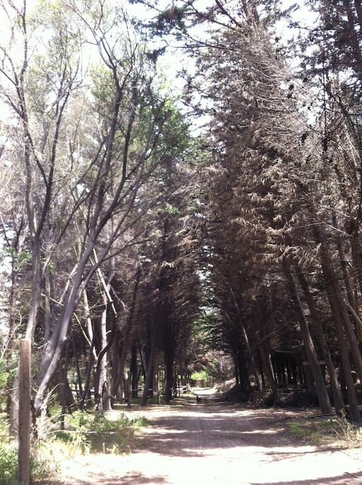 Bosque // The forest