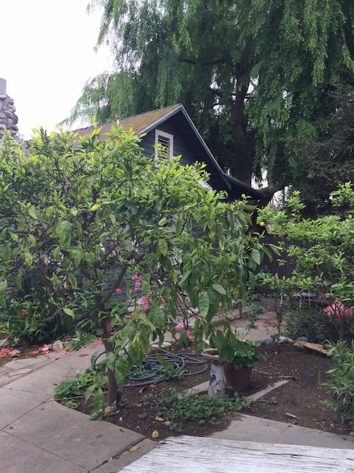 Front of cottage with citrus trees