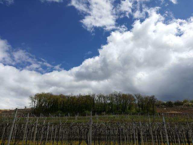 Camera con terrazza fra vigne della Valpolicella
