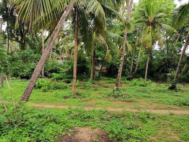 Island Farmstay with Kayaking Island Tour