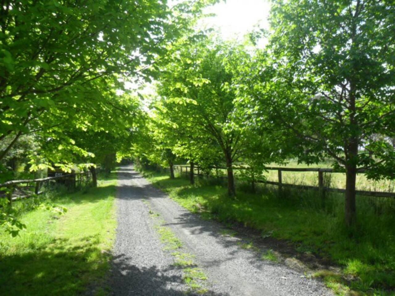 Brushy Creek Driveway