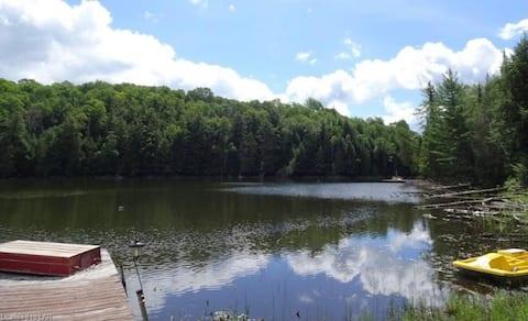 Treetop view