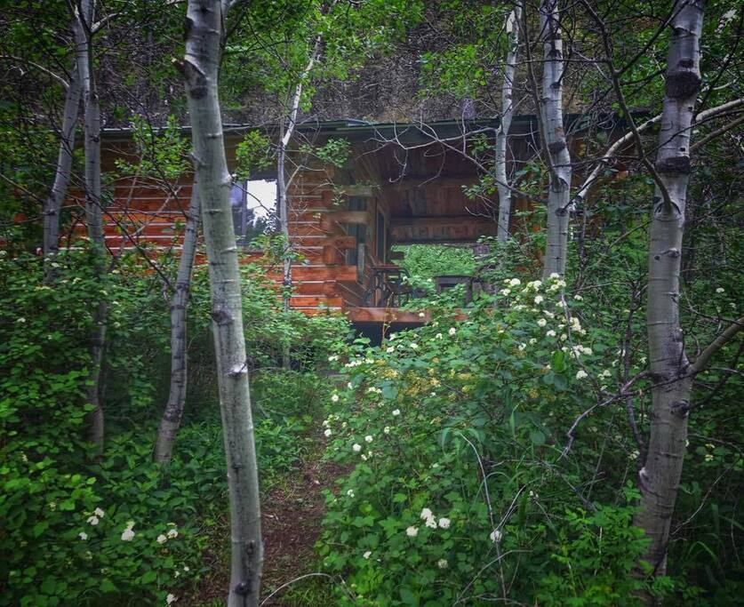 Tucked into a beautiful aspen grove serenaded by birds and a hangout for scampering squirrels.