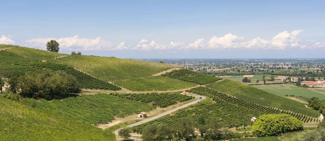 Stunning vineyards, hills near Milan - Salice Terme