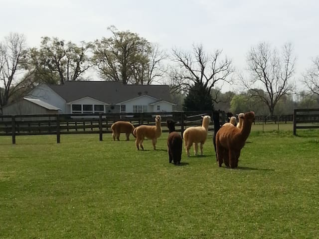 Harmony Oaks Cottage on Alpaca Farm