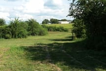 view from the back pond - where there's a deer feeder and hog trap