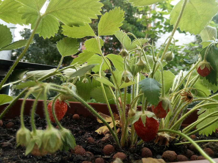 Strawberries... !