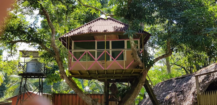 Casa mango tree. Perchée dans un manguier.