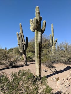 Photo of Desert Botanical Garden
