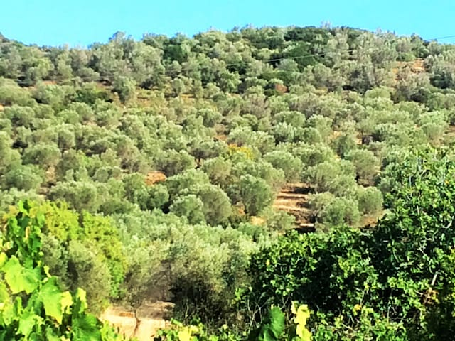 View from the back terrace overlooking mountains and olive groves