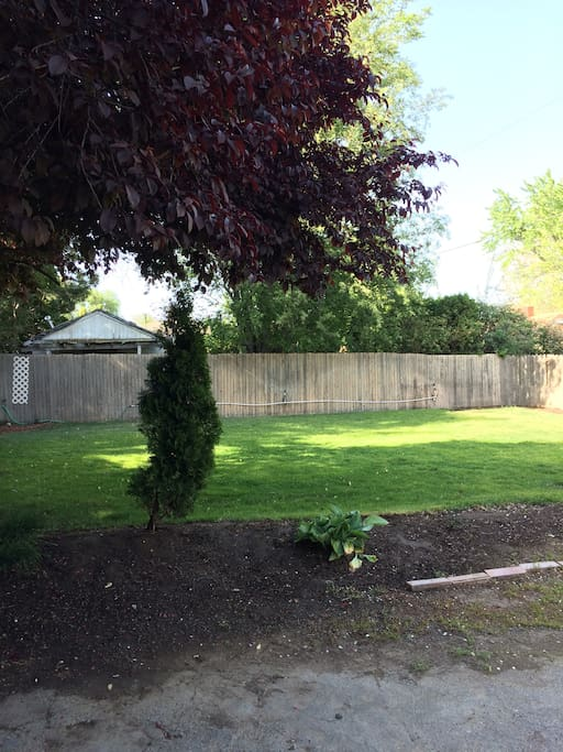Backyard lawn area