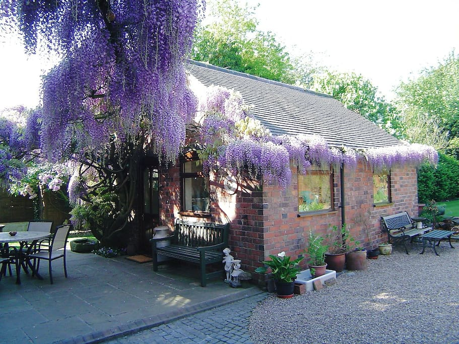 Patio area to enjoy sitting under magnificent Wisteria